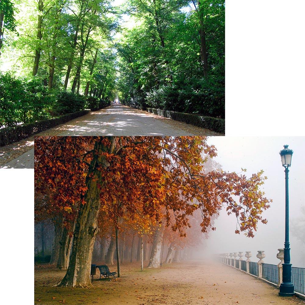 Rutas naturales restaurante jard n del pr ncipe for Restaurante jardin del principe en aranjuez